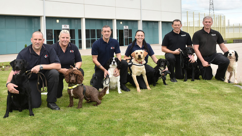Drug detection dogs